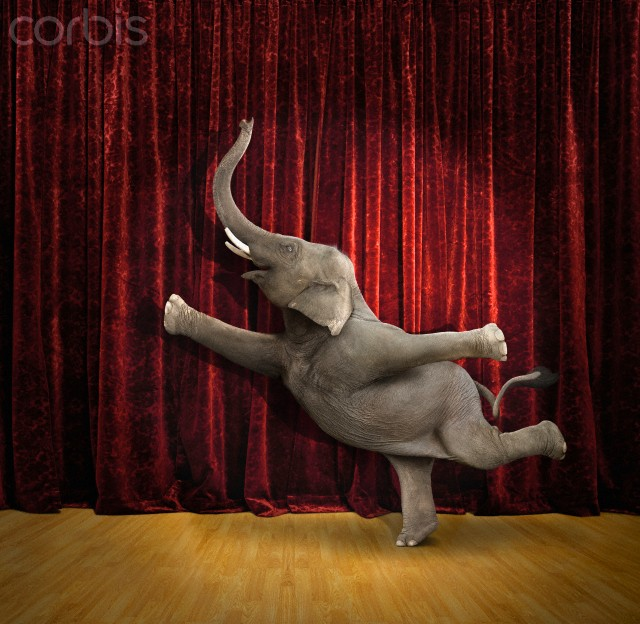 Elephant-Performs.jpg